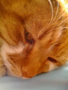 cat_macro