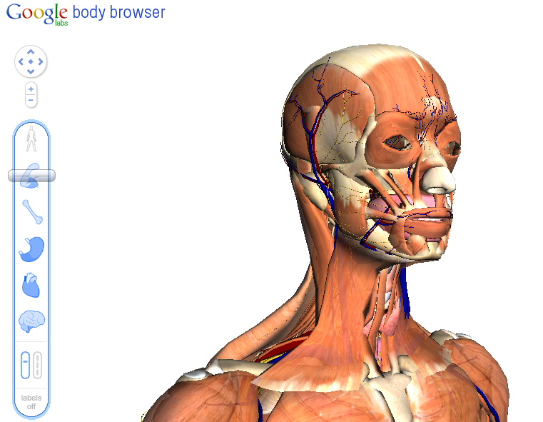 Google 3d Body Browser Now On A Tablet Via Android 30 As Seen