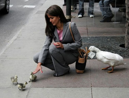 Duck robbing a woman