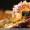 If you really like beautiful and interesting aquatic life , then this app is for you. Real Aquarium HD.  At the basic level, its a series of HD videos of various sea creatures chill'in (sorry) in the sea.  However, this app provide a second layer where you can learn about […]